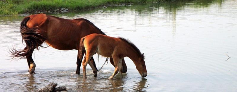 Hidratación caballo época de verano