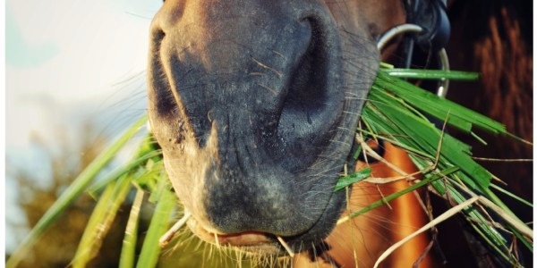 Problemas y anomalías dentales comunes en los caballos