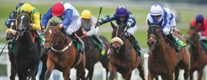 portada-cobalto-carreras-caballo