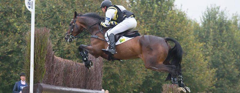 Suplementos caballos de concursos