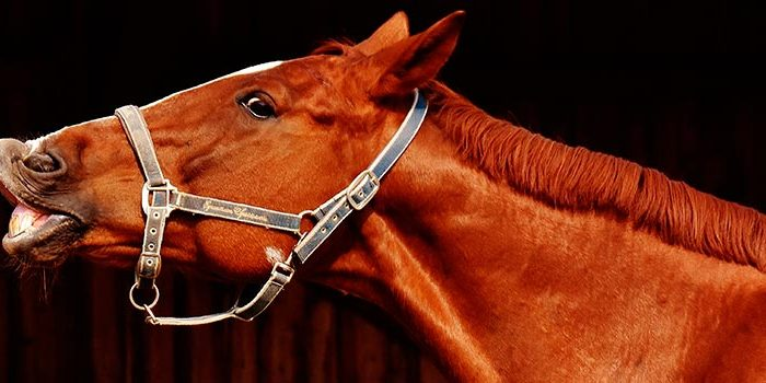 Tranquilizantes caballos