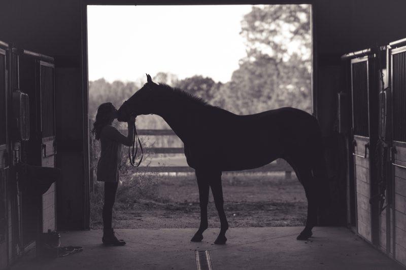 caballos cuidados