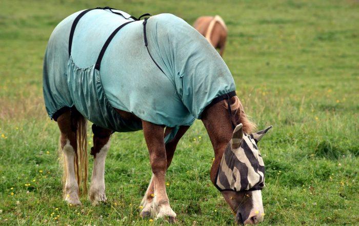 Protección de caballos frente a insectos voladores