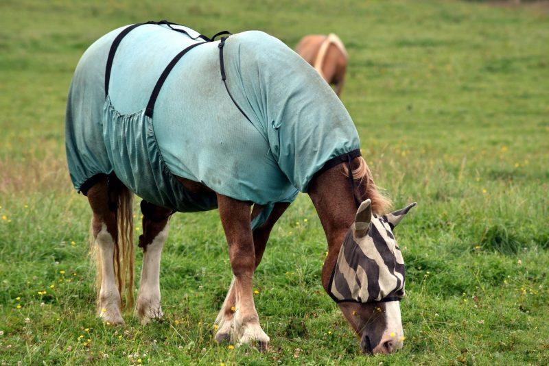 Protección caballos de insectos
