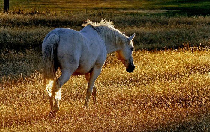 Sistema inmunitario de caballos