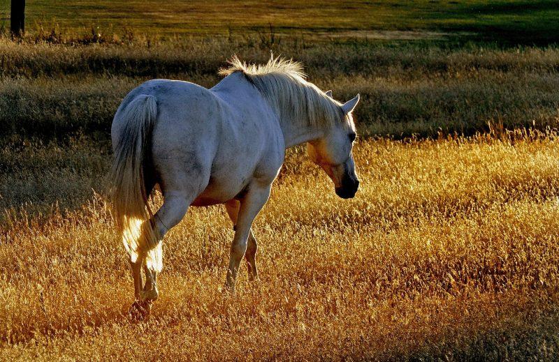 Sistema inmunitario de caballos 1