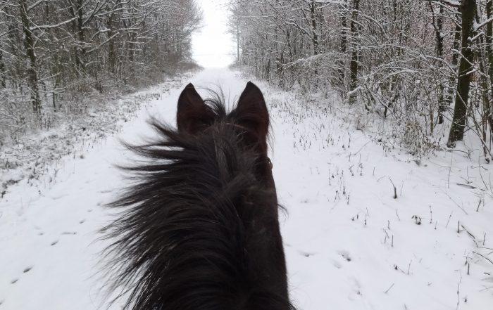 Cuidados caballos en Invierno