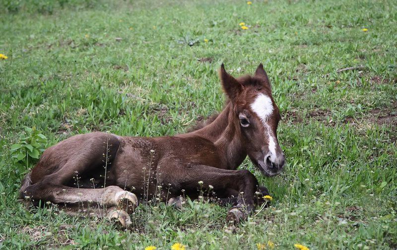 Cría del caballo, potro