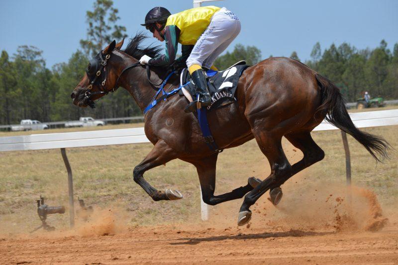 Artrosis en caballos