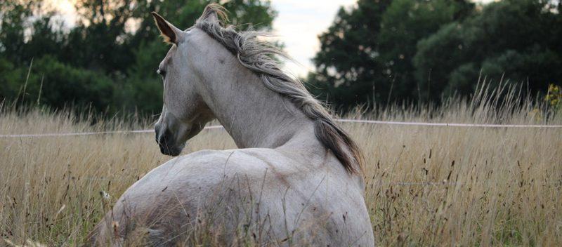 Problemas musculares y óseos del dorso equino