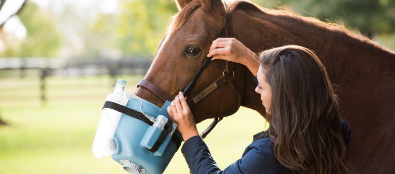 problemas respiratorios en caballos