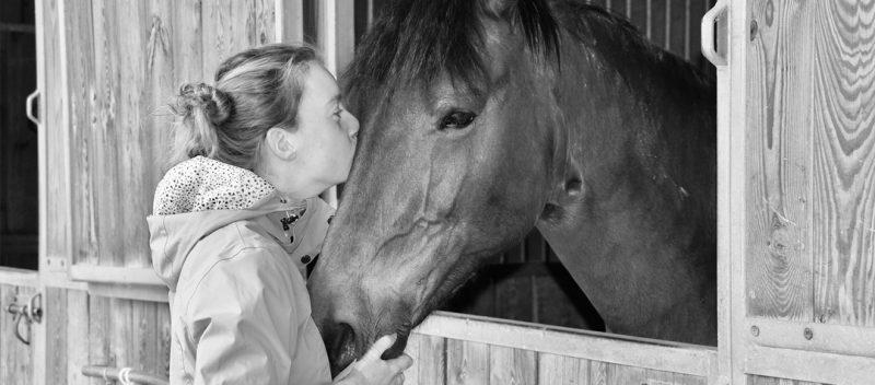 Cuidados del caballo estabulado