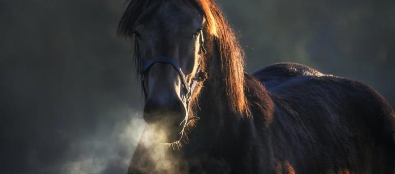 Sistema respiratorio del caballo