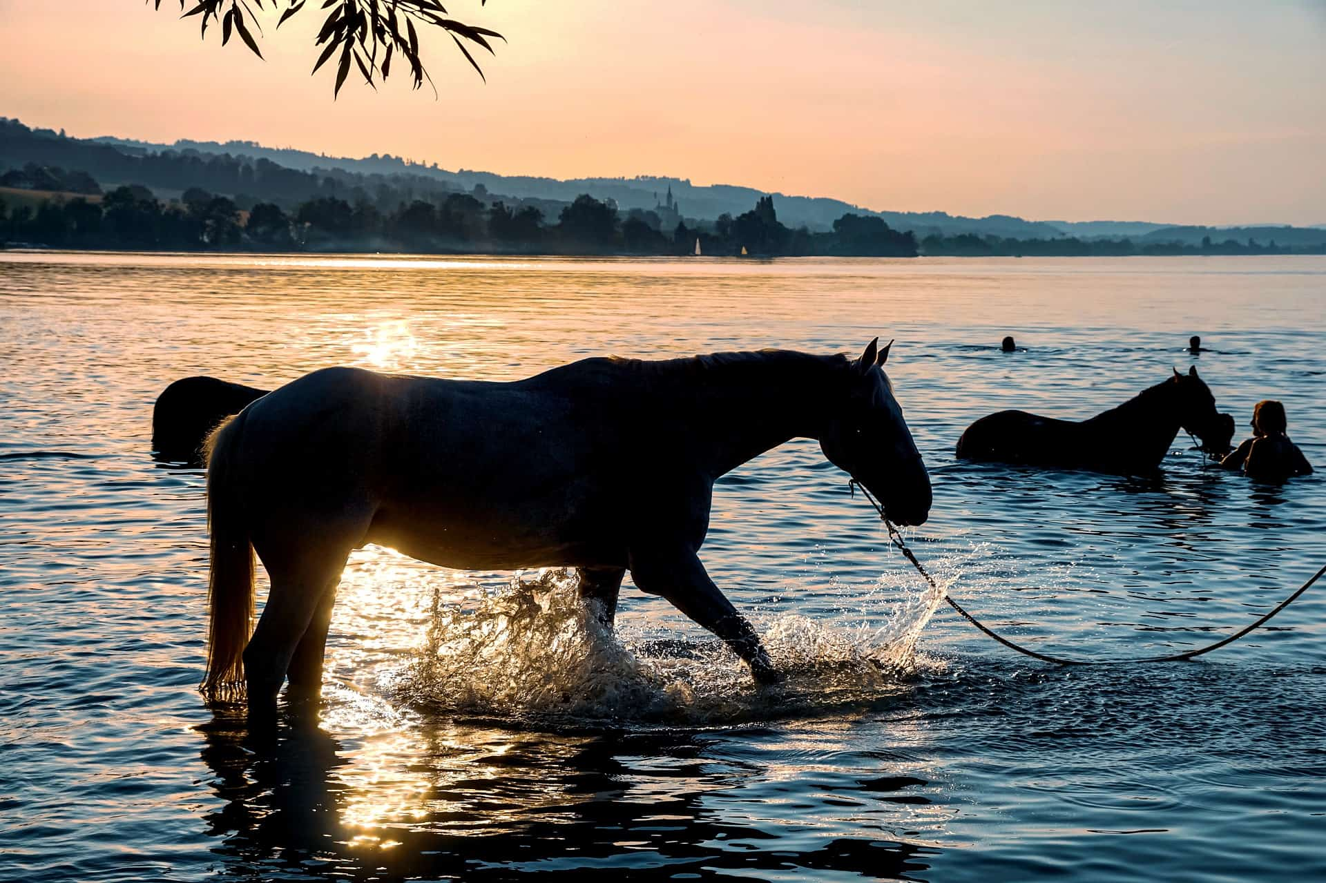 golpes de calor en los caballos