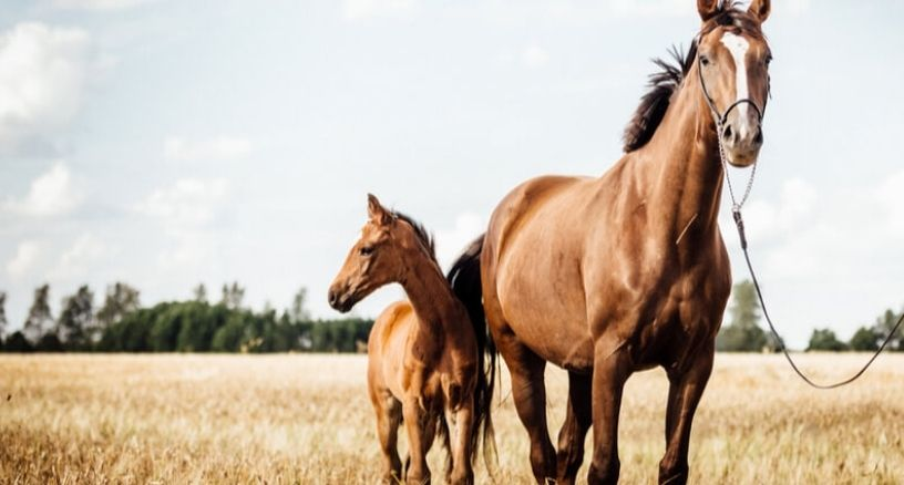Dermatología caballos