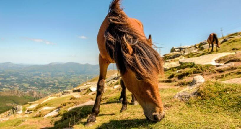 Patologías digestivas caballos