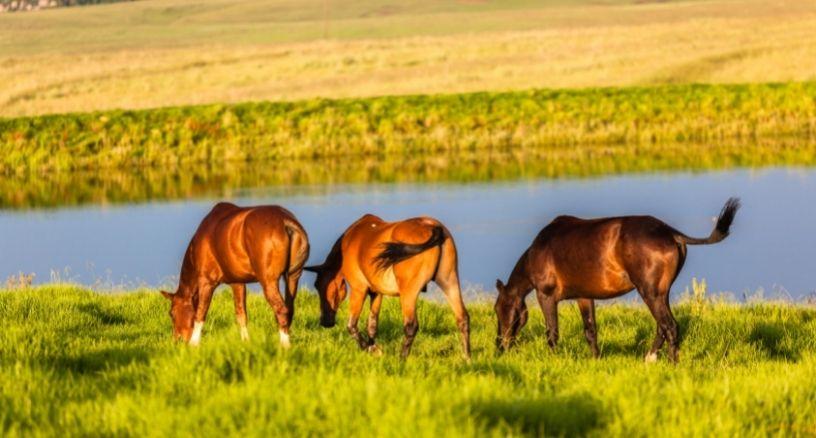 patologías digestivas en caballos
