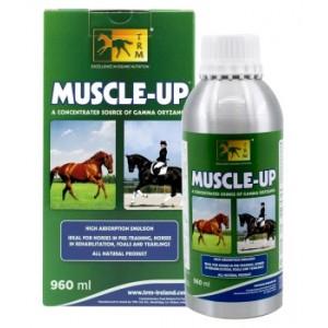 Desarrollo muscular en caballos